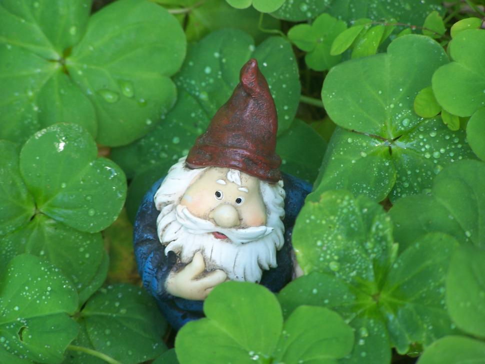 Download Free Stock HD Photo of Gnome in the CloverGnome in the Clover Online
