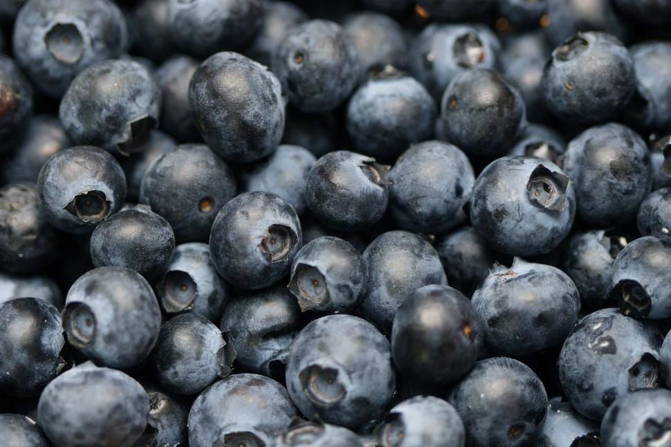 Download Free Stock HD Photo of blueberries background Online