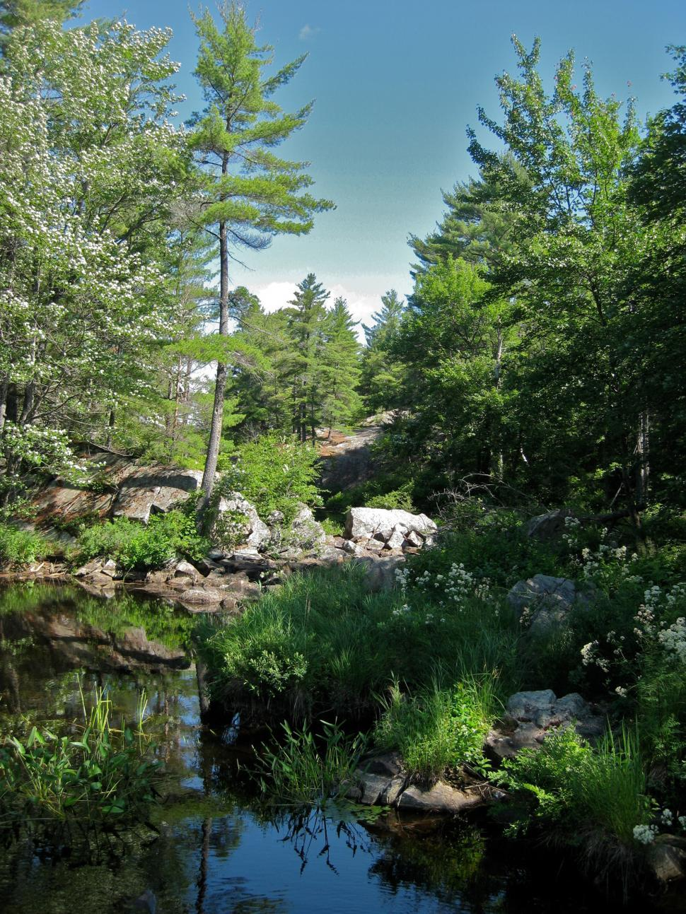 Download Free Stock HD Photo of Interior Pond 3 Online