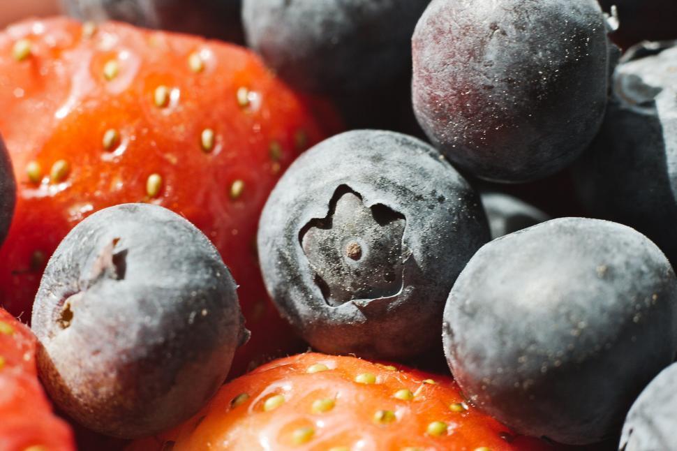 Download Free Stock HD Photo of Berries Online