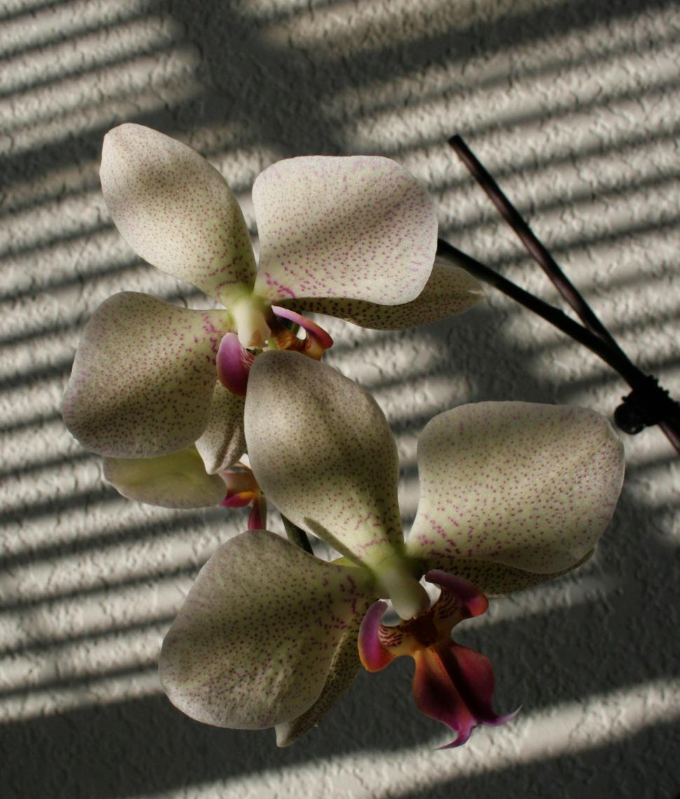 Download Free Stock HD Photo of Orchid Online