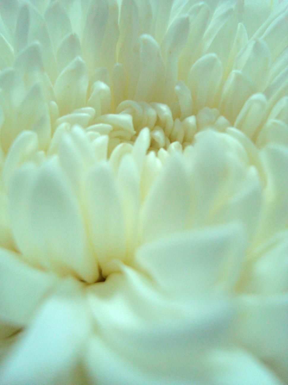Download Free Stock HD Photo of White Flower Close-Up Online