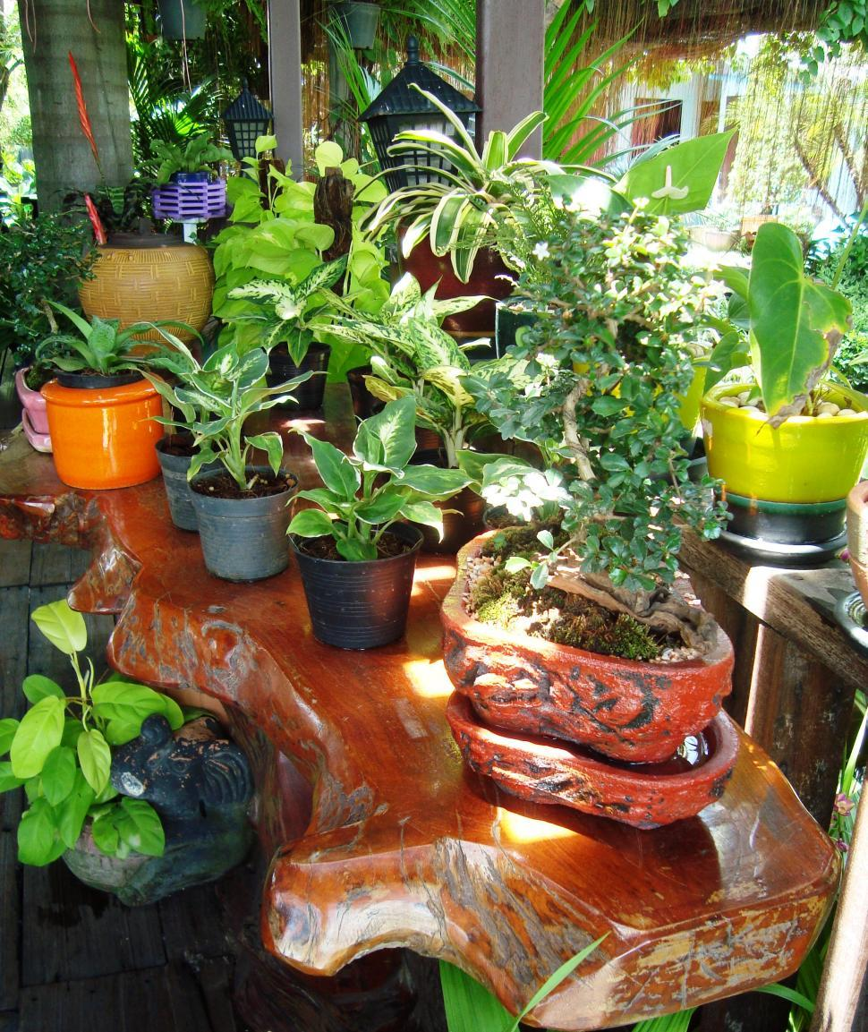 Download Free Stock HD Photo of Tropical Potted Plants Online