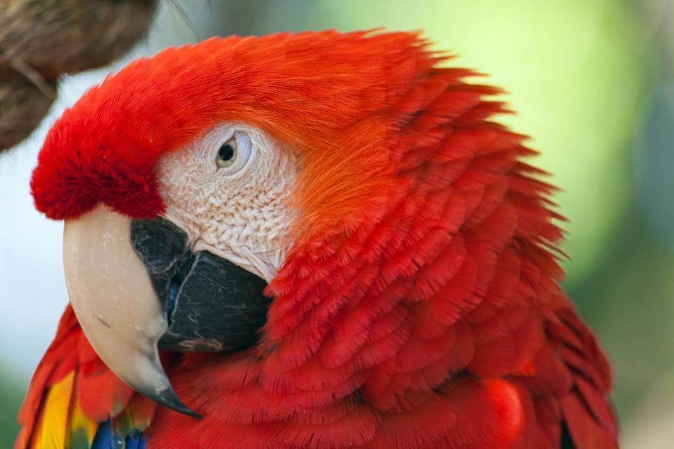 Download Free Stock HD Photo of Macaw Online