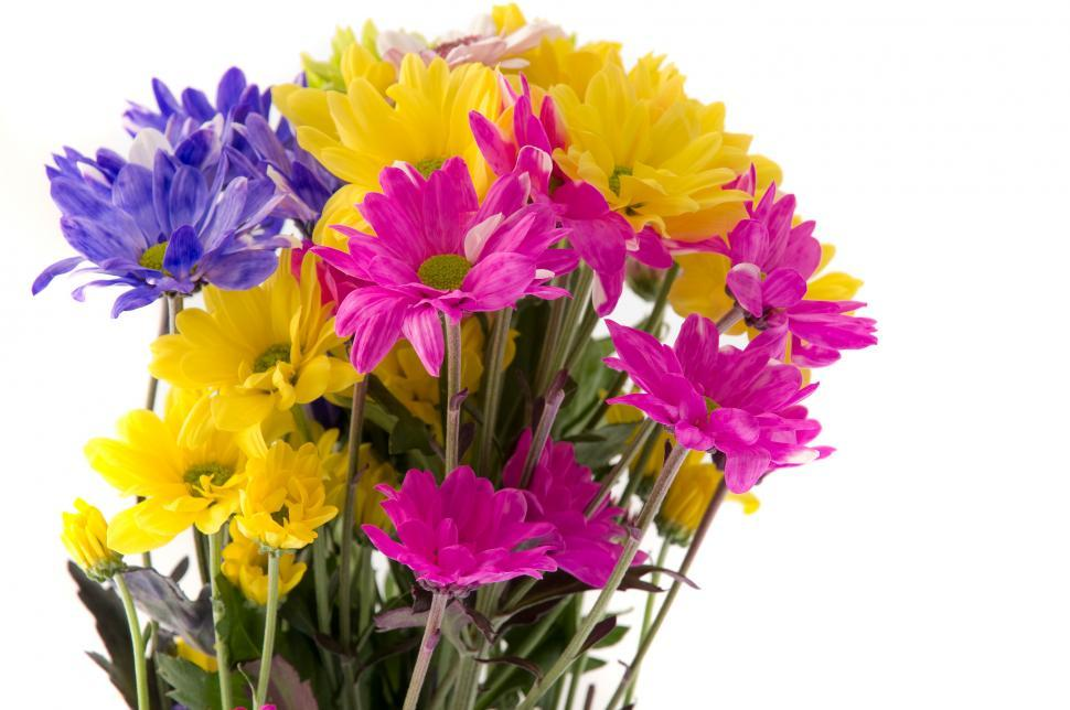 Download Free Stock HD Photo of Colorful Flowers Online