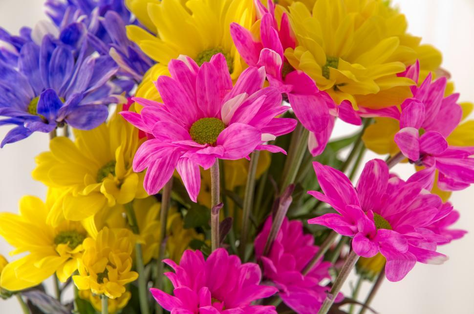 Download Free Stock HD Photo of Colorful Bouquet   Online