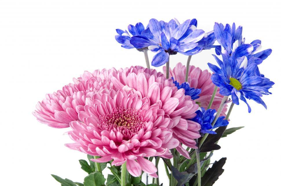 Download Free Stock HD Photo of Garden Flowers Online