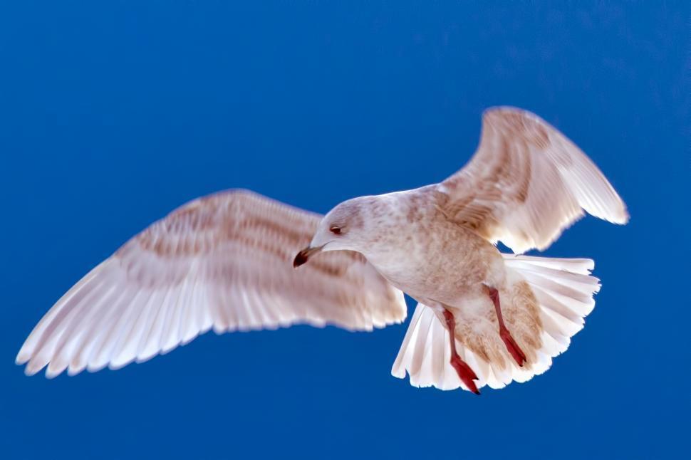 Download Free Stock HD Photo of Bird Online