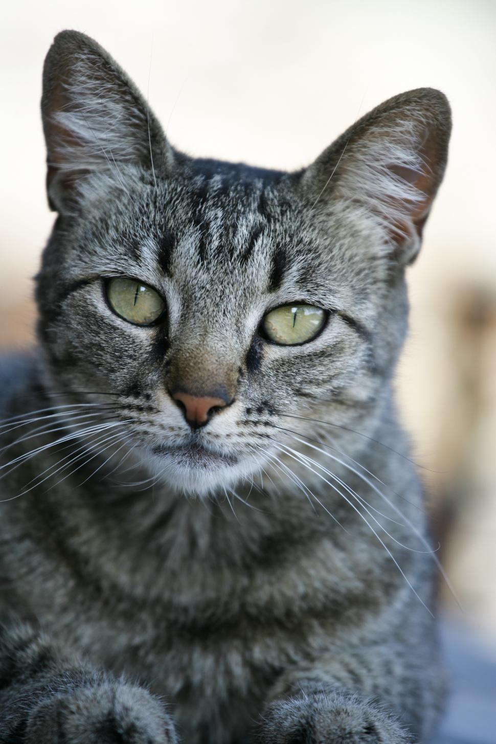 Download Free Stock HD Photo of Cat Portrait Online