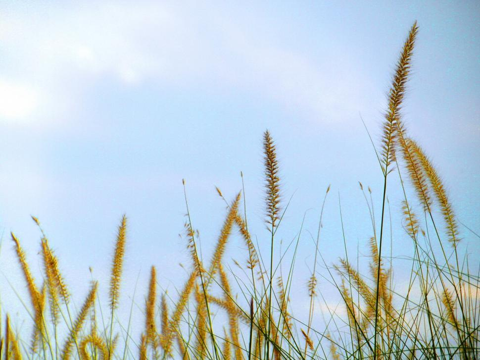 Download Free Stock HD Photo of Long Grass Online