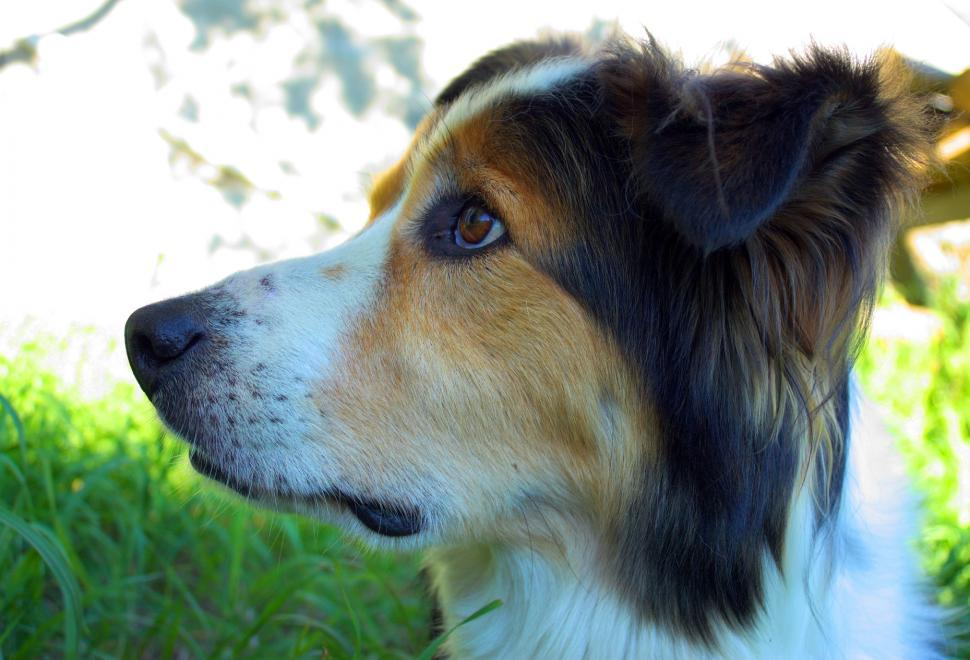 Download Free Stock HD Photo of Border Collie Online