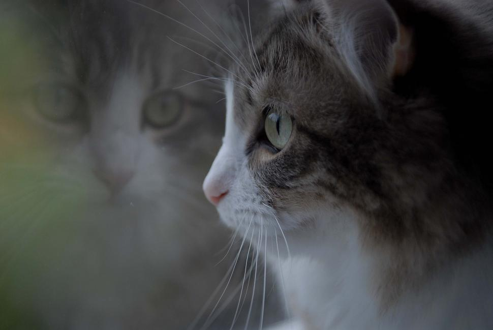 Download Free Stock HD Photo of Grey And White Cat Online