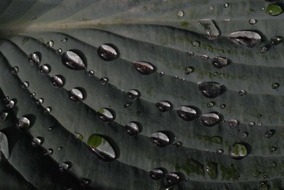 Download Free Stock HD Photo of Water Drops On Leaf Online