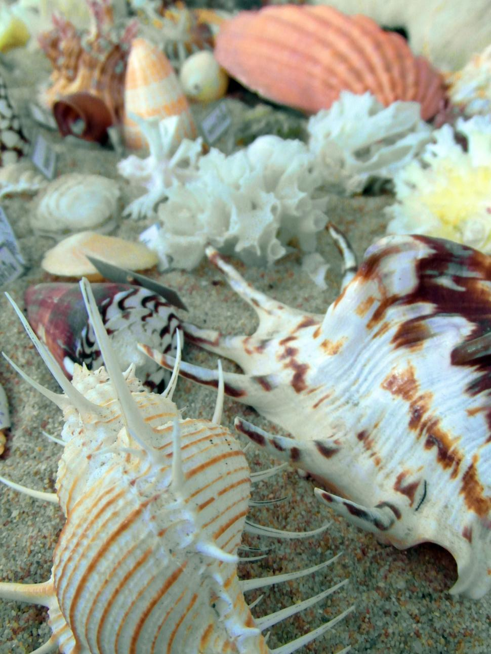 Download Free Stock HD Photo of Seashells Online