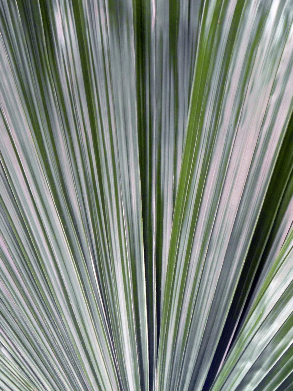 Download Free Stock HD Photo of Palm Leaf Background Online