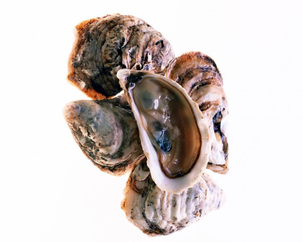 Download Free Stock HD Photo of Oysters Online