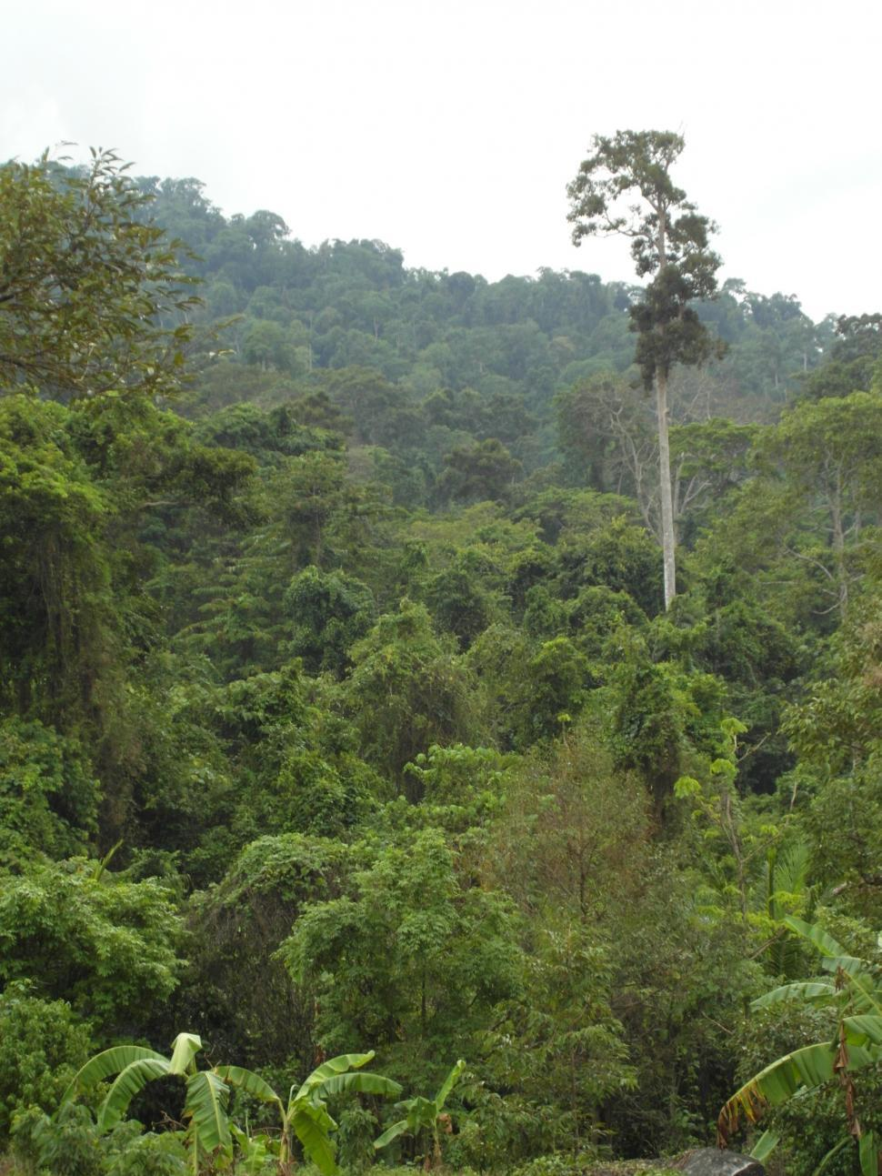 Download Free Stock HD Photo of Jungle / Tropical Rainforest Online
