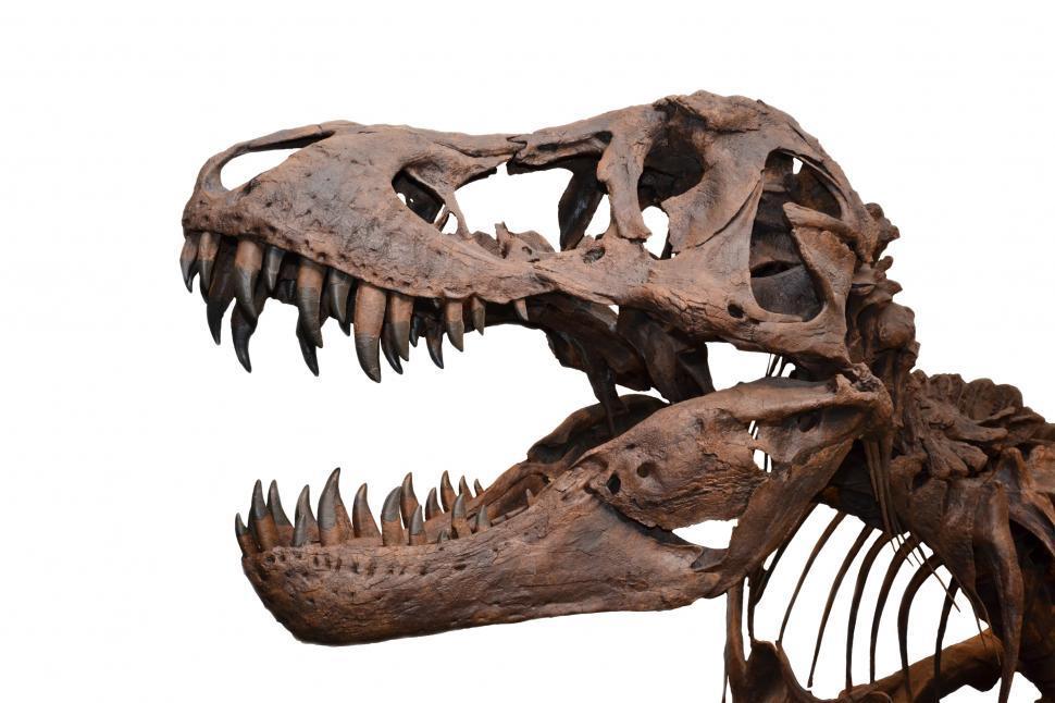 Download Free Stock HD Photo of Tyrannosaurus rex skull isolated Online