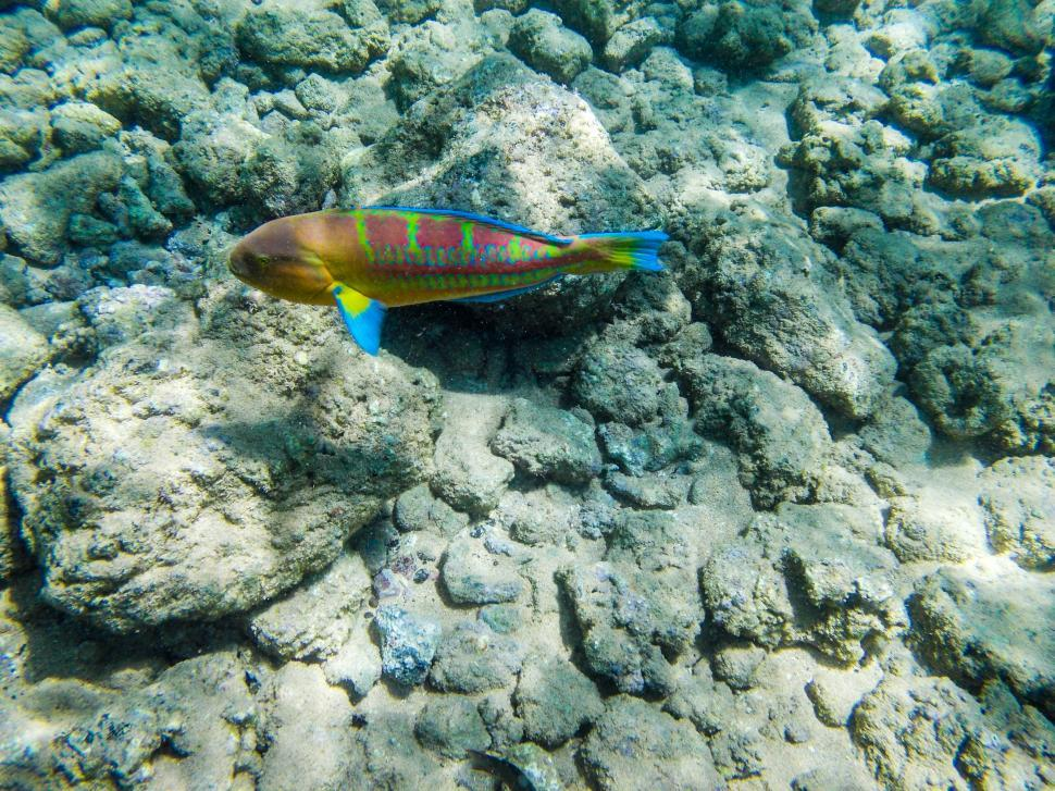 Download Free Stock HD Photo of Fish underwater in Kauai Online