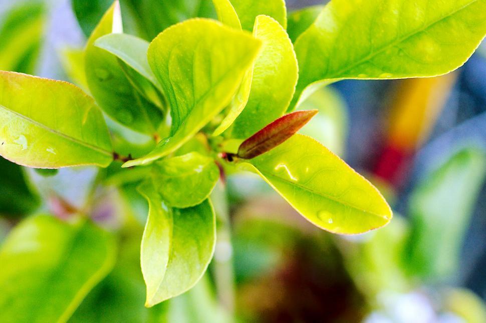 Download Free Stock HD Photo of Lemon tree Online