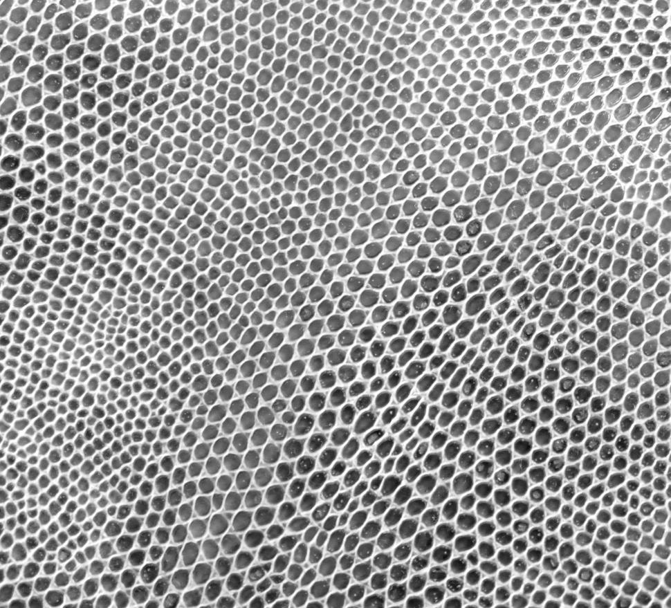 Download Free Stock HD Photo of Animal Skin Texture Online