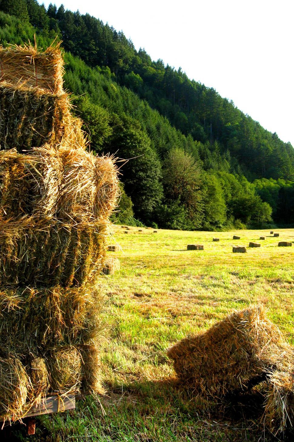 Download Free Stock HD Photo of Hay in the Fields Online