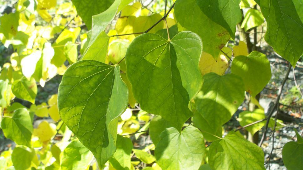 Download Free Stock HD Photo of Leaves Online