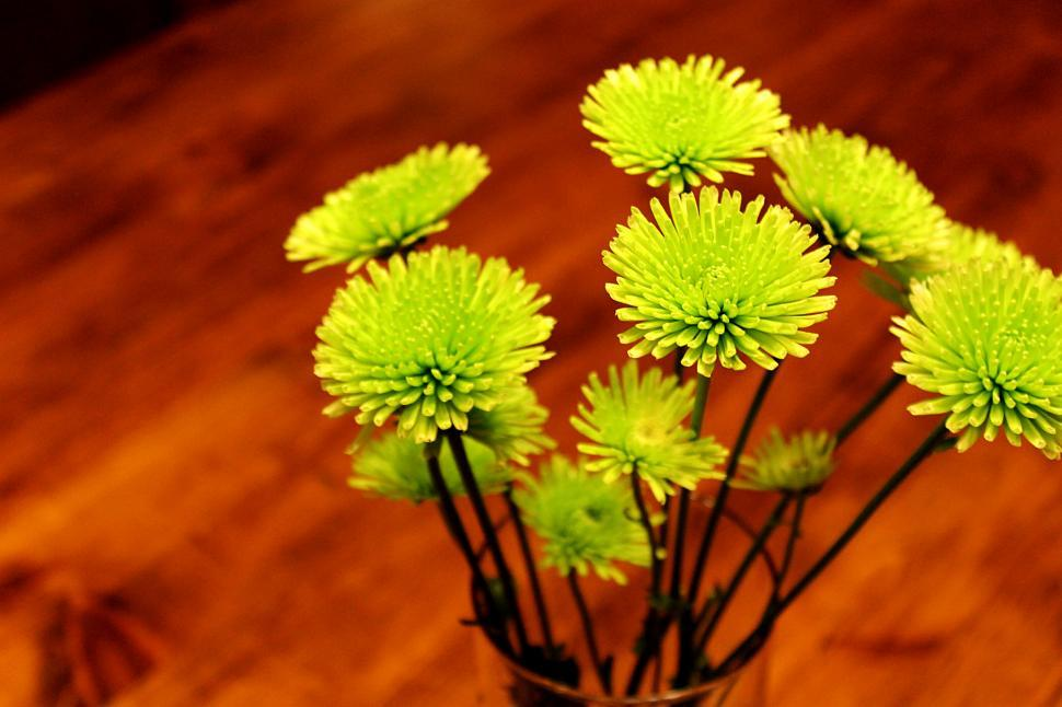 Download Free Stock HD Photo of Green Flowers in Vase Online