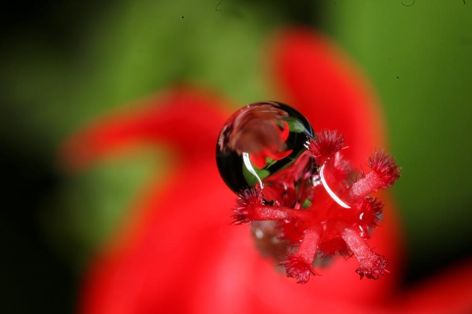 Download Free Stock HD Photo of Water drops on flowers Online