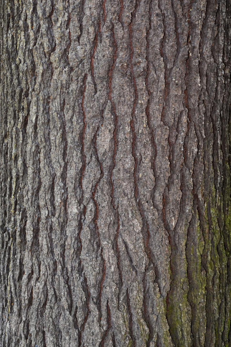 Download Free Stock HD Photo of Bark of eastern white pine Online