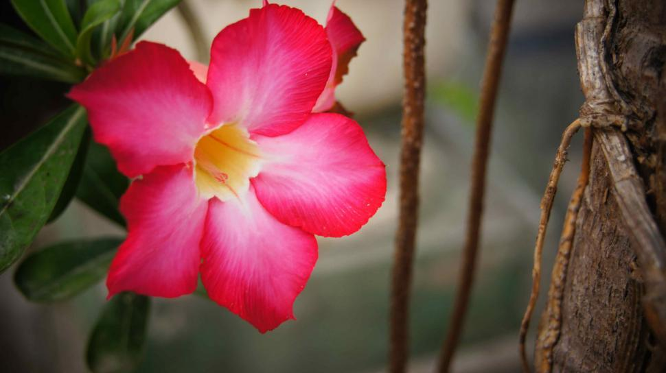 Download Free Stock HD Photo of Bali Flowers Online