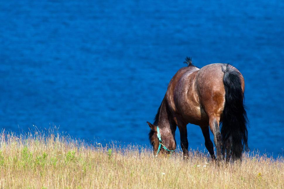 Download Free Stock HD Photo of Horse Online