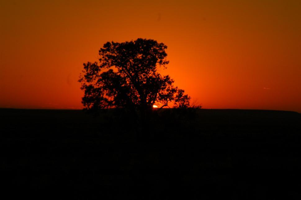 Download Free Stock HD Photo of Orange Sunset and Shadow Tree Online