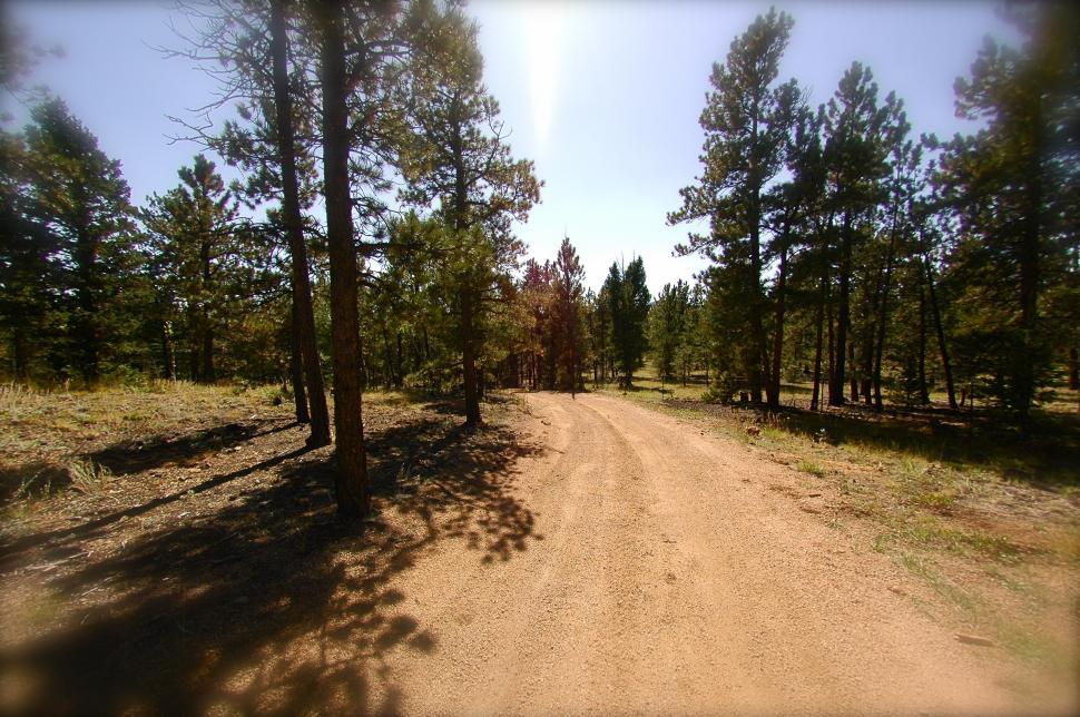 Download Free Stock HD Photo of Dirt Road through the Pine Trees Online