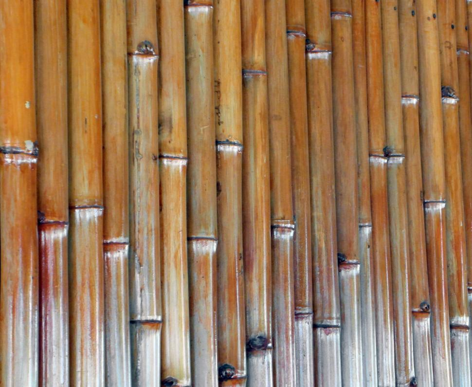 Download Free Stock HD Photo of Isolated Bamboo Background Online
