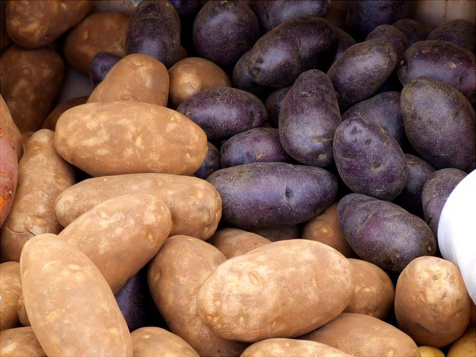 Download Free Stock HD Photo of Russet Potatos Online