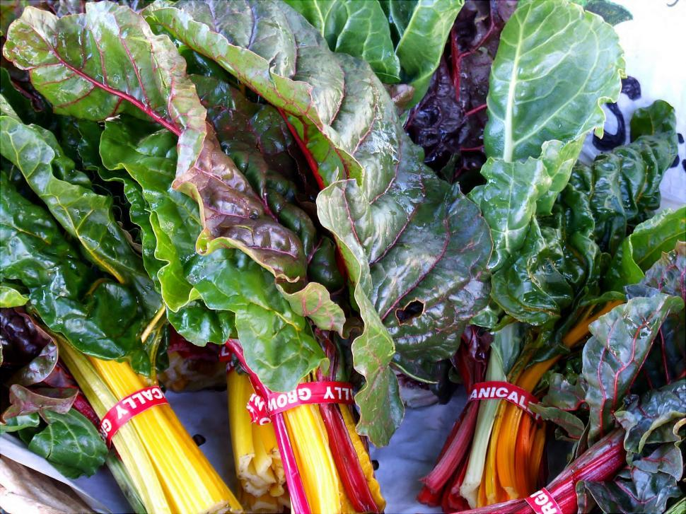 Download Free Stock HD Photo of Swiss Chard Online