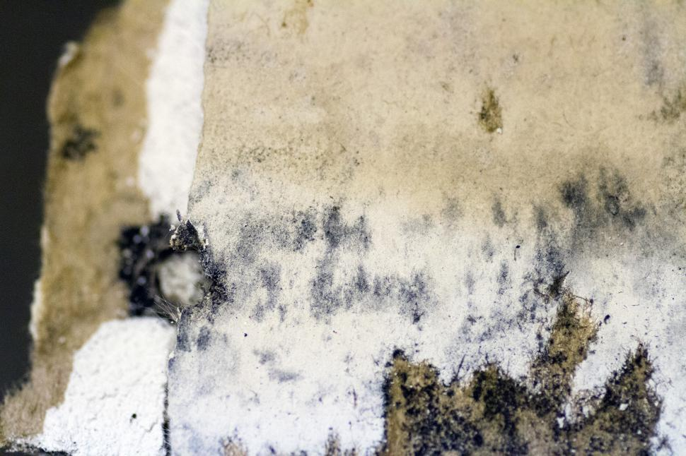 Download Free Stock HD Photo of Mold Online