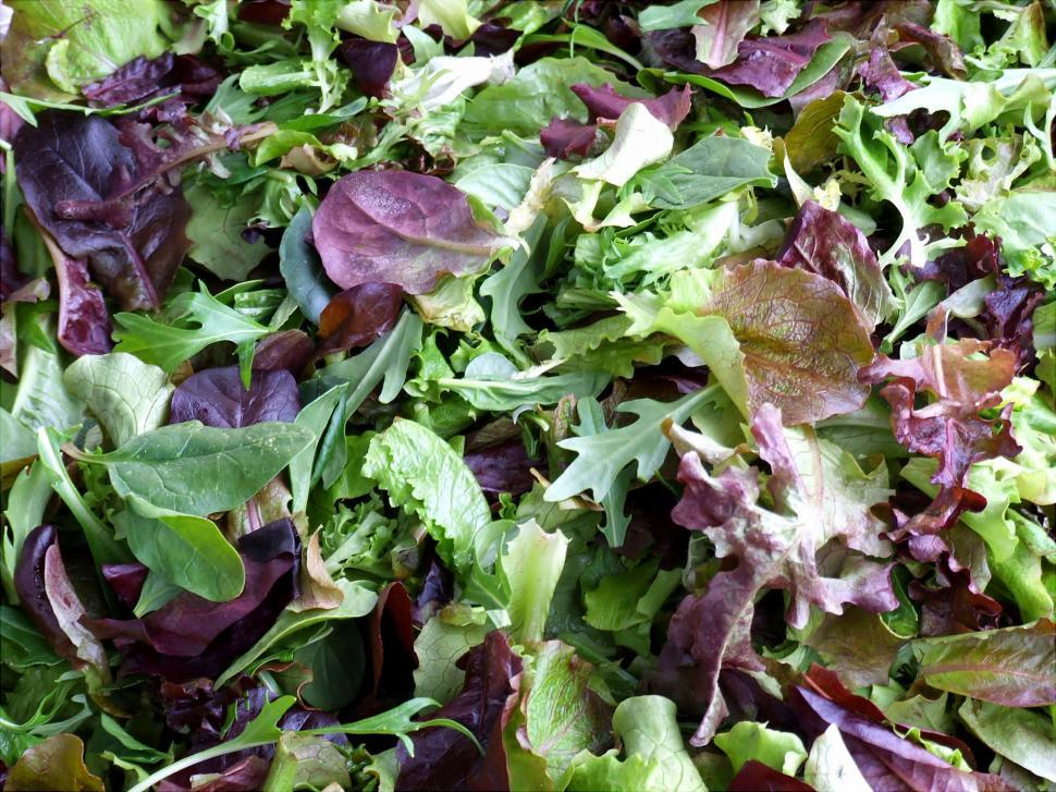 Download Free Stock HD Photo of Baby Greens Online
