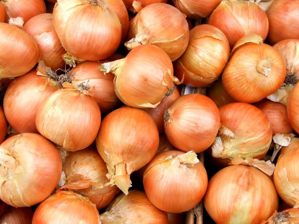 Download Free Stock HD Photo of Onions Online