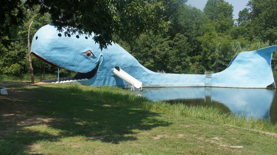 Download Free Stock HD Photo of Whale Water Slide Online