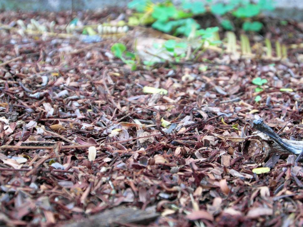 Download Free Stock HD Photo of Forest Floor Background Online