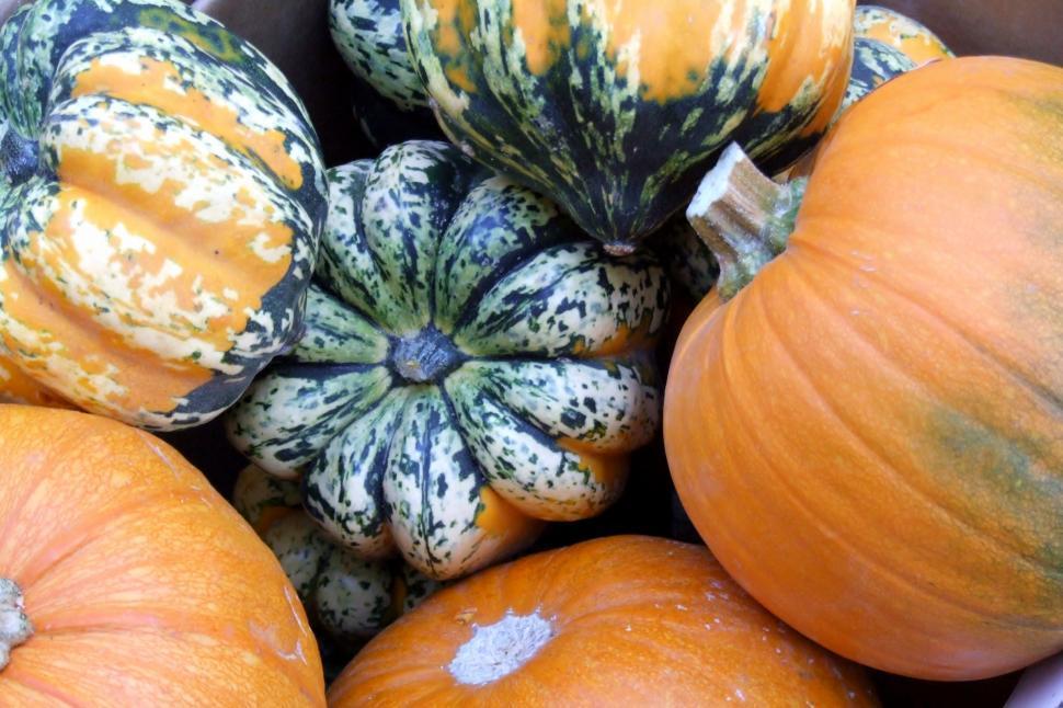 Download Free Stock HD Photo of Pumpkin Harvest Online