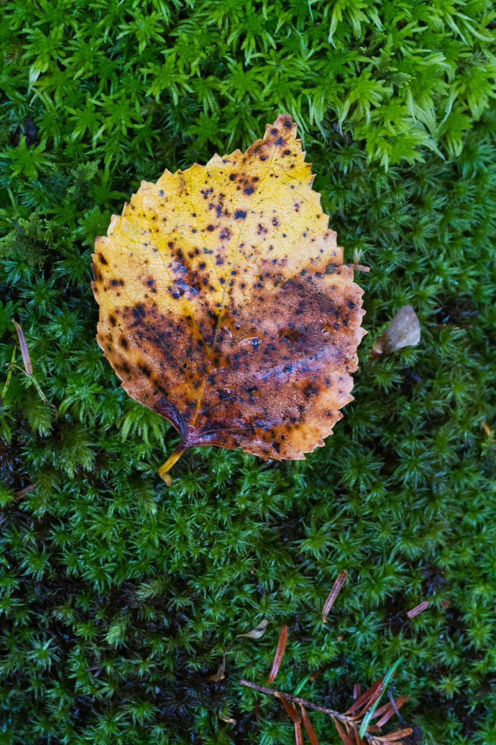 Download Free Stock HD Photo of Leaf Online
