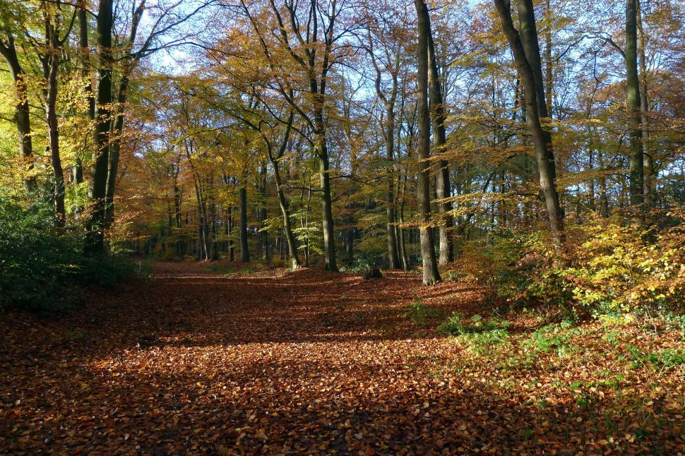Download Free Stock HD Photo of Autumn trees in a park Online