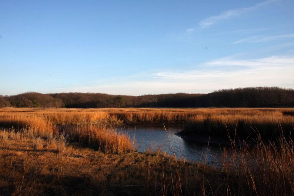 Download Free Stock HD Photo of Salt Marsh, Cheesequake State Park, NJ Online