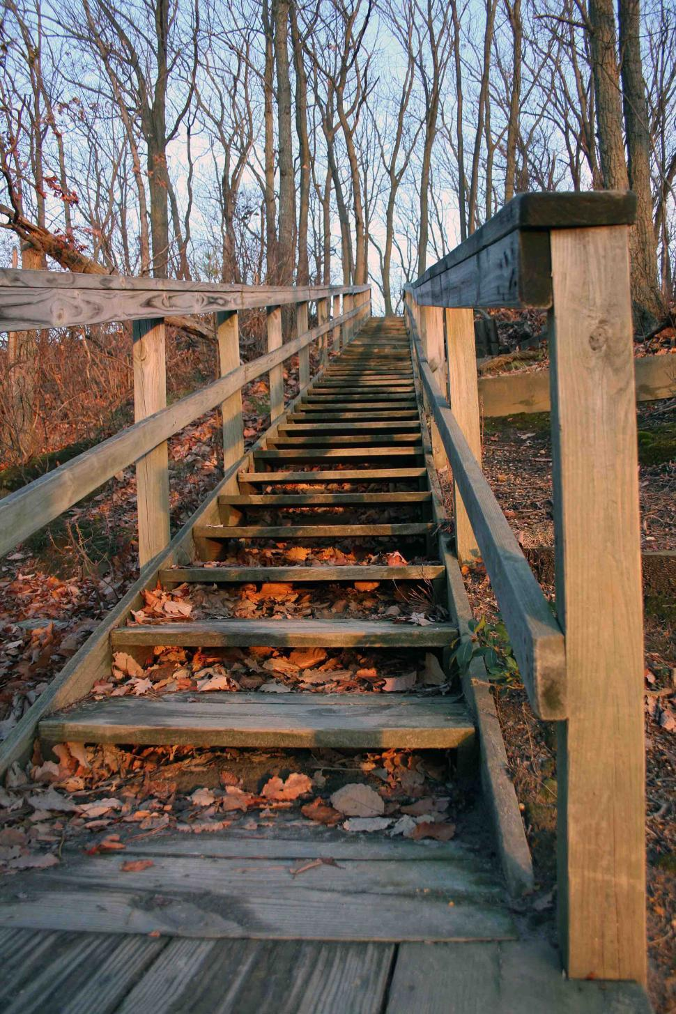 Download Free Stock HD Photo of  Wooden steps in Cheesequake State Park, NJ Online