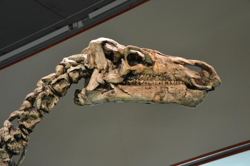 Download Free Stock HD Photo of Iguanodon bernissartensis Online
