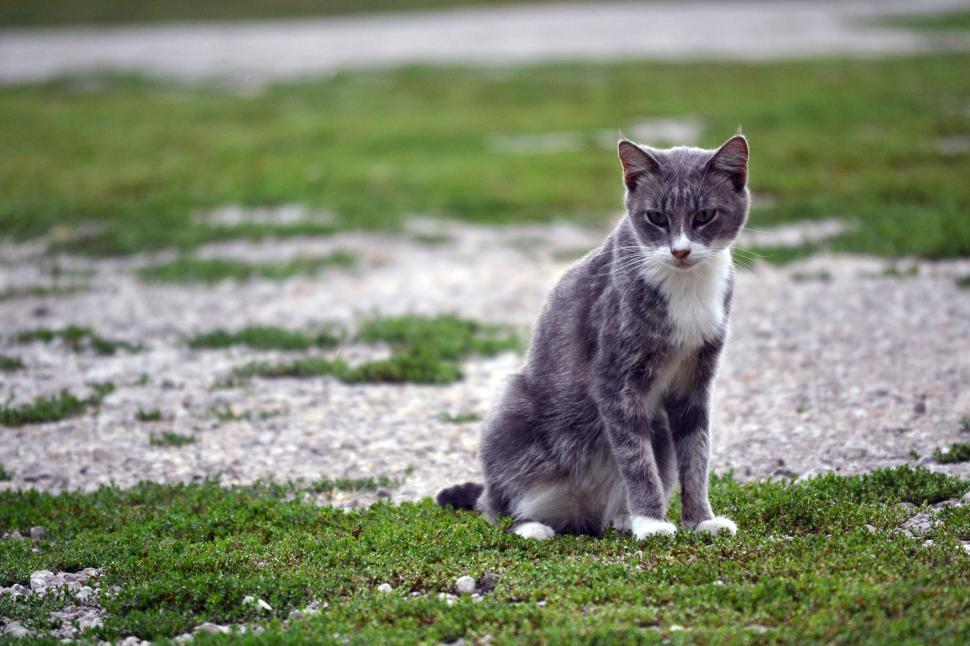Download Free Stock HD Photo of Scraggly Farm Cat Online