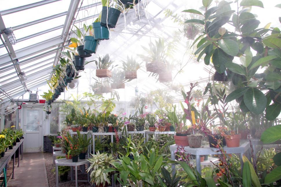 Free image of Greenhouse orchids being misted.